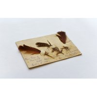 A postcard with feathers of birds in the trenches